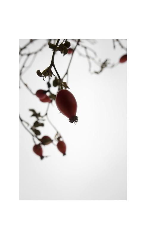 acanthaceous004 Kopie
